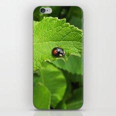 black ladybug I iPhone & iPod Skin