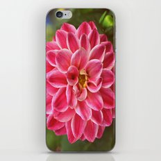 Dahlia iPhone & iPod Skin
