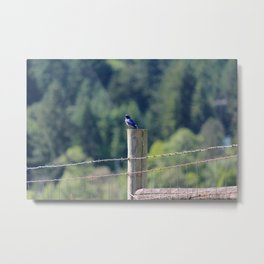 Bluebird in Summer Metal Print