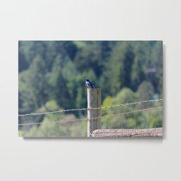 Bluebird in Summer Metal Print