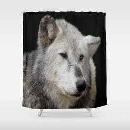 Grey Wolf Close-Up (Canis lupus) Shower Curtain