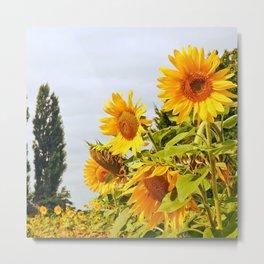 French Sunflower Field Metal Print
