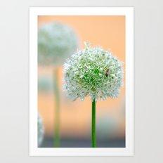 Great star flower Art Print