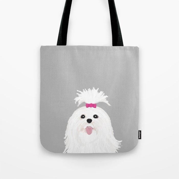 Pima - Shih Tzu cute white funny dog