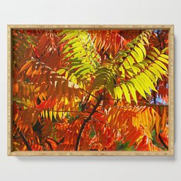Japanese Rowan in Autumn Colours Serving Tray