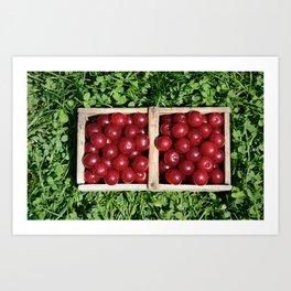 Prunus cerasus sour cherry fruit Art Print