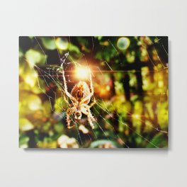 Spider Bokeh Metal Print