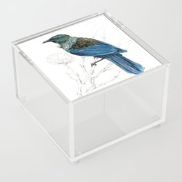 Tui, New Zealand native bird Acrylic Box