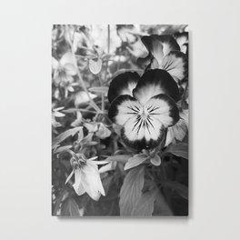 Pansy Black and White - jjhelene Metal Print