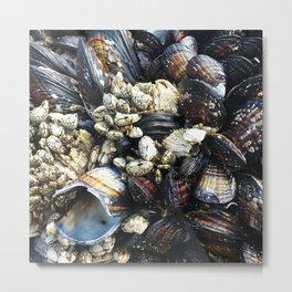 Mussels on a rock Metal Print