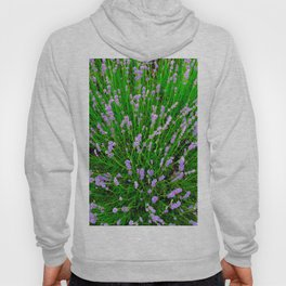 Lavender Close Up Hoody