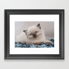 Pretty Kitty Framed Art Print