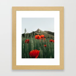 Poppies popping at Chautauqua Park Framed Art Print
