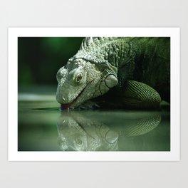 Drinking Iguana Art Print