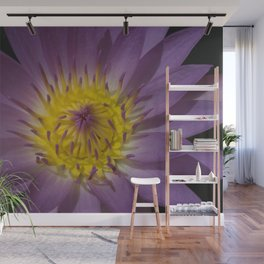 Water Lily - Nymphaea sp. Wall Mural
