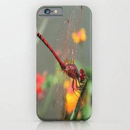 Red Skimmer or Firecracker Dragonfly With Lantana Background iPhone Case