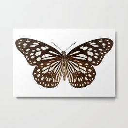 "Butterfly species Tirumala limniace ""Blue Tiger"" Metal Print"