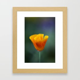 California Poppy Framed Art Print