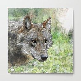 Wolf_20151202_by_JAMFoto Metal Print