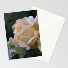 Sunlight On The Yellow Rose Stationery Cards