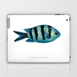 Scissortail Sergeant Laptop & iPad Skin