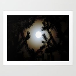Pine Frame Art Print