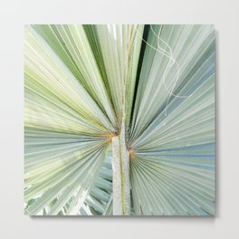 Fanned Palms Metal Print