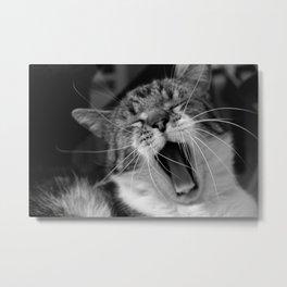 Cat yawn Metal Print