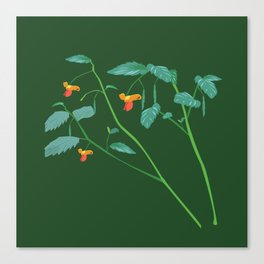 Jewel weed - illustration Canvas Print