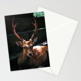 Tranquil Deer Stationery Cards