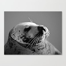 Howth Harbour Seal Canvas Print