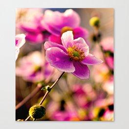 Japanese Anemone Canvas Print