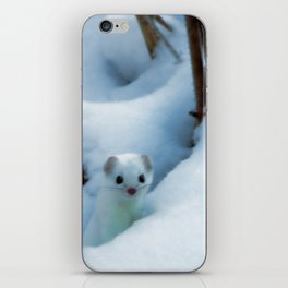 Winter weasel iPhone Skin