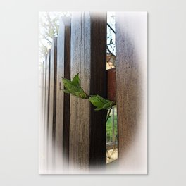 outside the fence Canvas Print