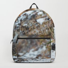 Fox in the snow v02. Backpack