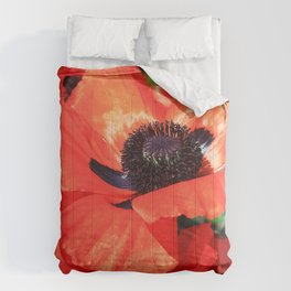 mohn Comforters