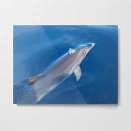 Dolphin and dreams Metal Print