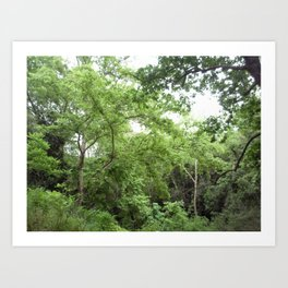 Green green Forest Art Print