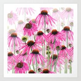 pink coneflower field Art Print