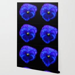 Purple Pansy on Black Wallpaper