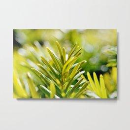 Yew Tree - New Growth Metal Print