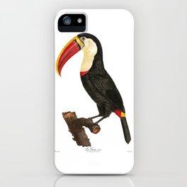 Toucan, Le Toucan, Toucan Bird, Antique Bird Print by Jacques Barraband Francois LeVaillant iPhone Case