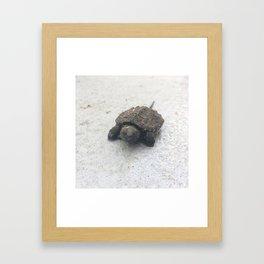 Snap To It Framed Art Print