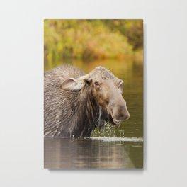 Smiling Moose Metal Print