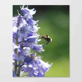 Bee on Bluebells Canvas Print