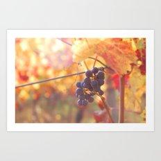 Fall Grapes Art Print