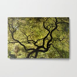 Japanese Maple Tree Metal Print