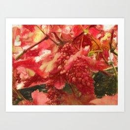 grapevine Art Print