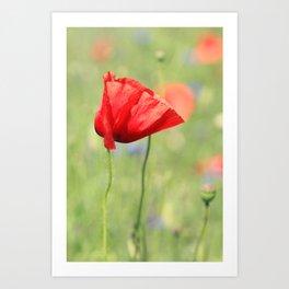 poppy flower no7 Art Print