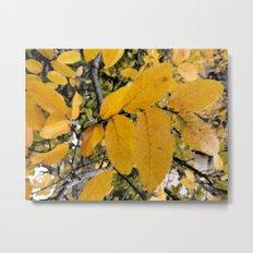 Yellow Leaves of Autumn Metal Print